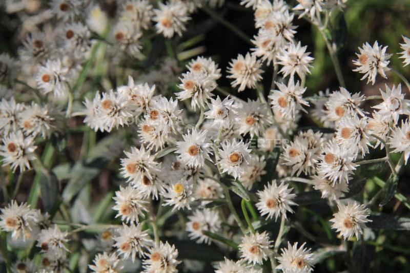Quelques fleurs en souvenir du bon temps Img_7014