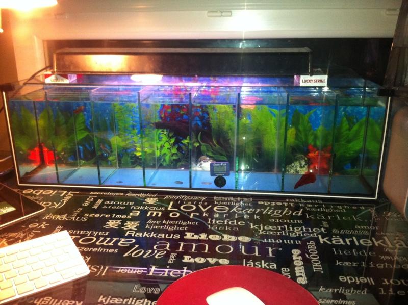 Besoin de conseils pour faire un aquarium 77292910