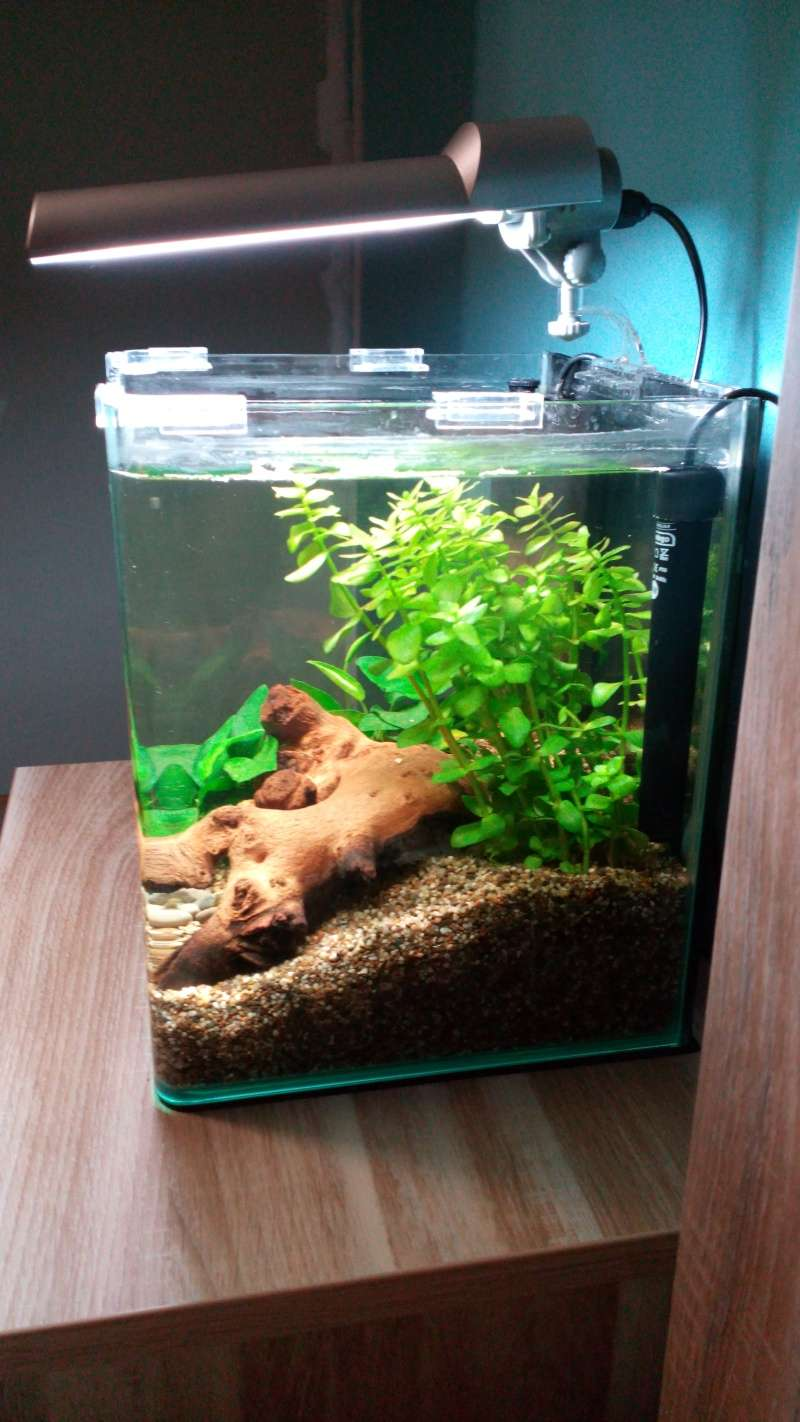 20l pour betta(photo) Img_2014