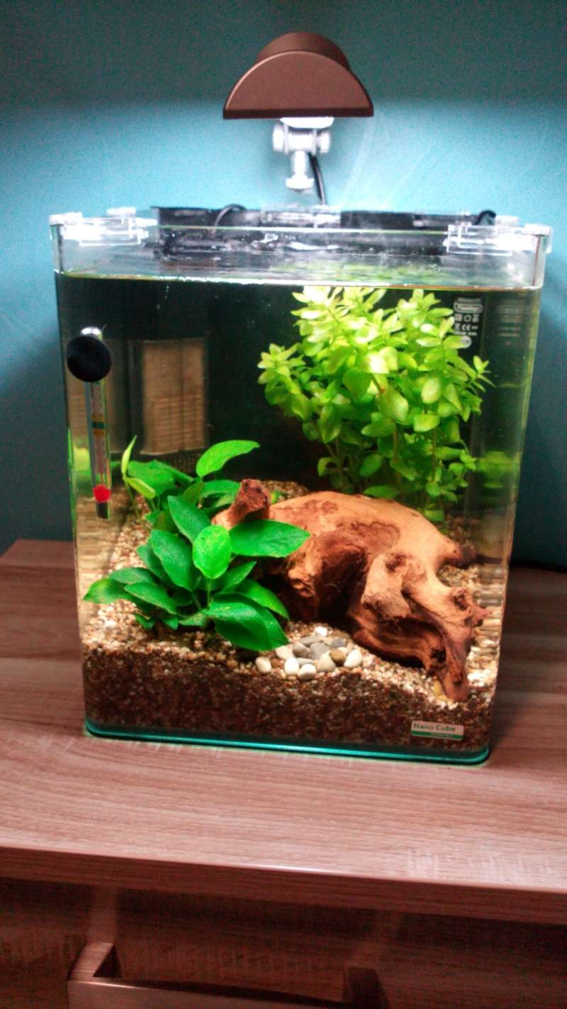 20l pour betta(photo) Img_2015