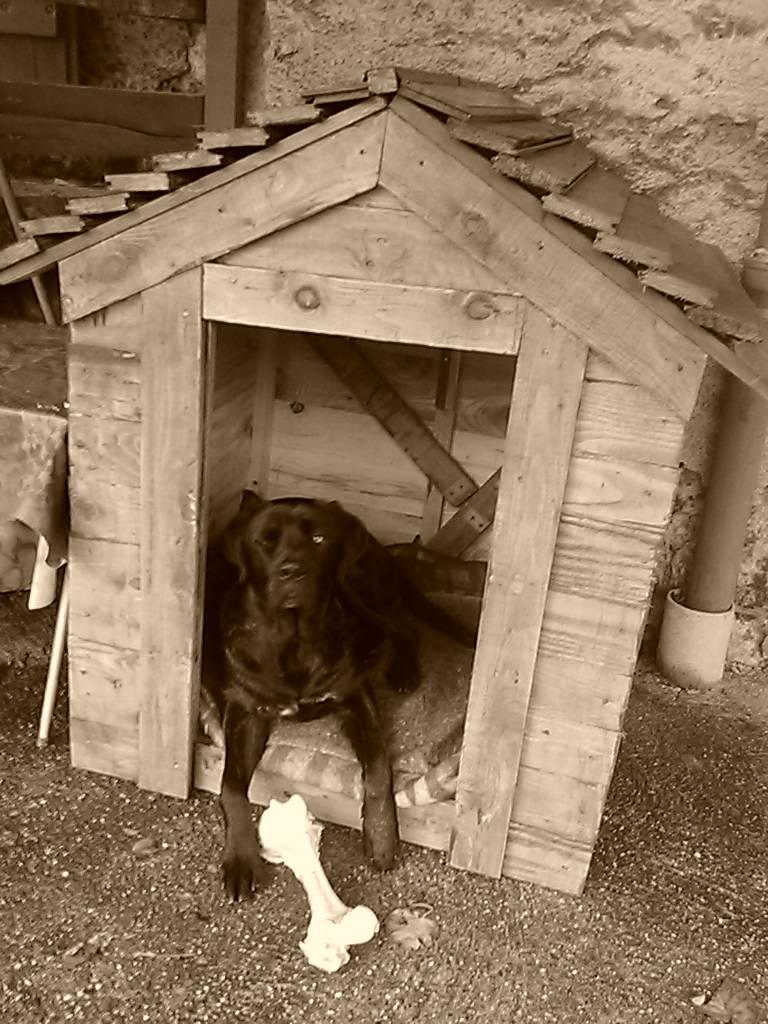 la niche de mon chien Img_2037
