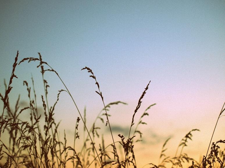 Grapher avec photo filtre 7 Sway_w11