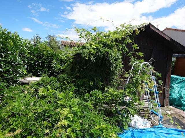 jardin zen  Terras10