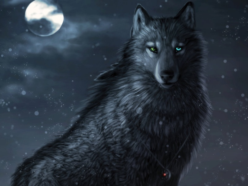 ID Loba || Wolf10