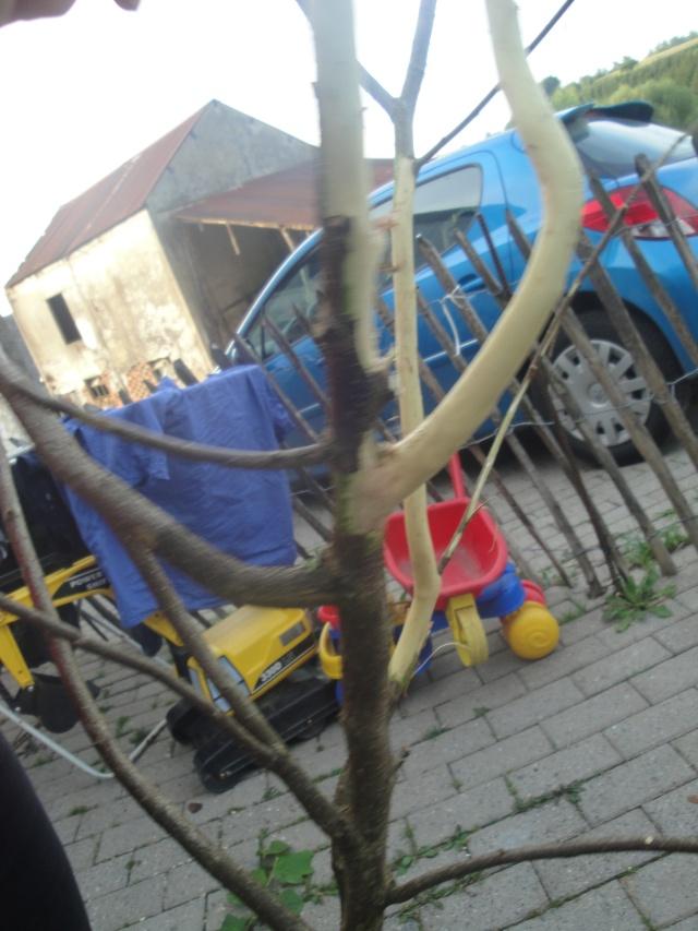 construction arbre a perruches Dsc00111