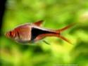 Ma première fois, mon premier aquarium Talach10