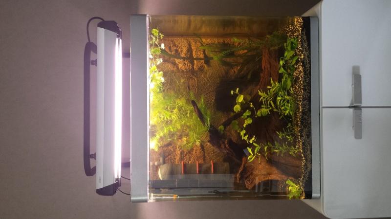 """Mon aquarium """"fluval"""" 20140810"""