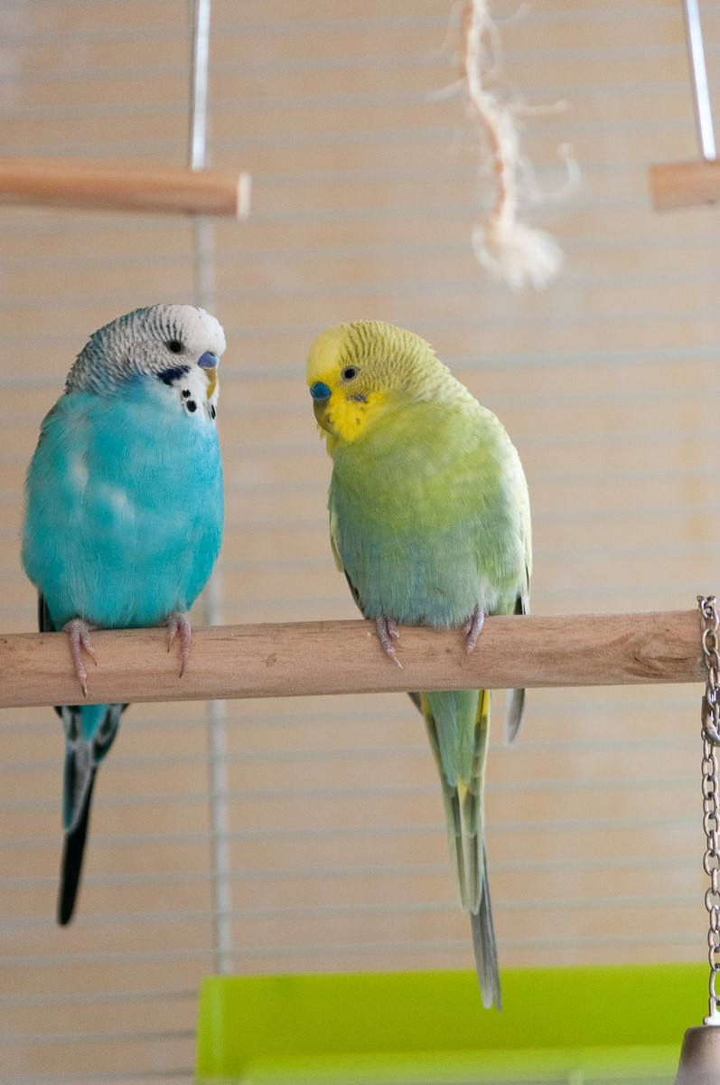 Pipo et Jet Re0_5812
