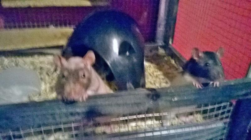 Mes ratounets ! Wp_20113