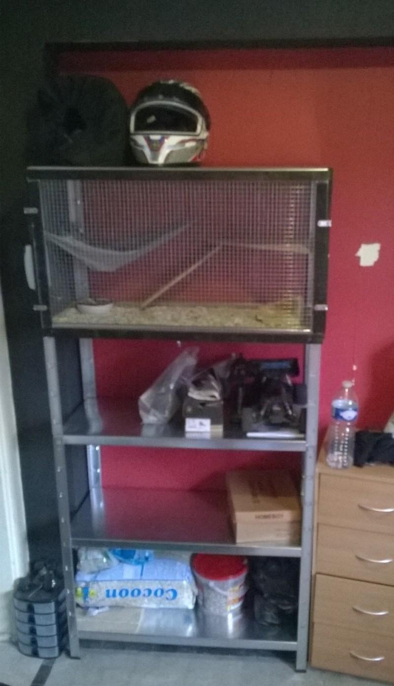 Photos de vos cages - Page 2 Wp_20114