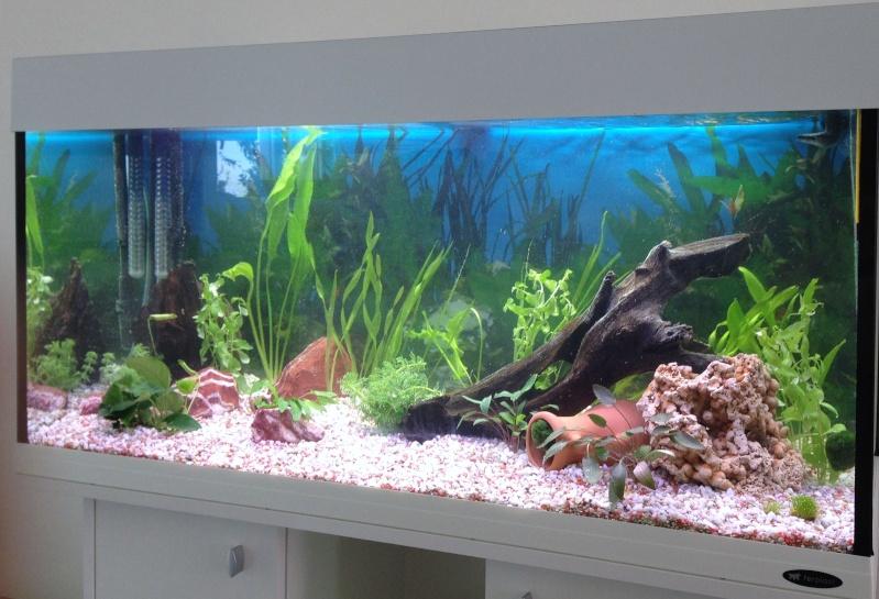 Conseil sur démarrage aquarium Jour_111