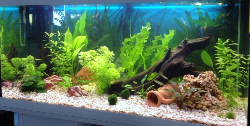 Conseil sur démarrage aquarium Jour_112