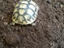 Patte de ma tortue gonflée  Image15