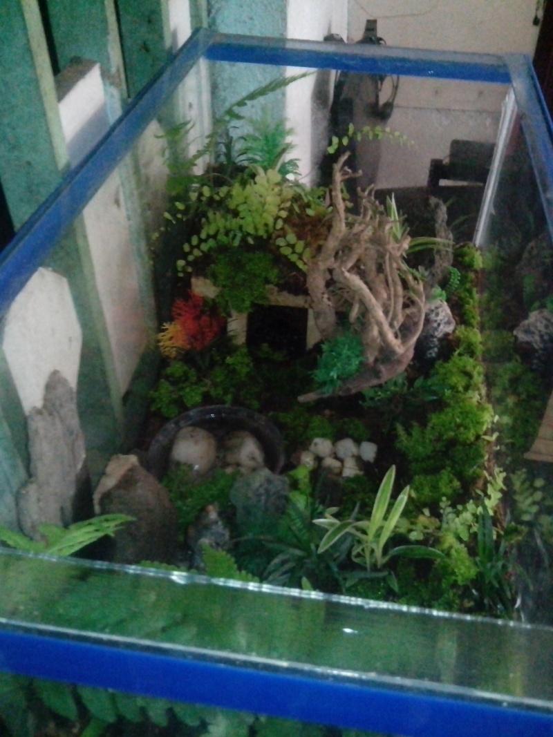 My Heterometrus Longimanus Lair Img_2011