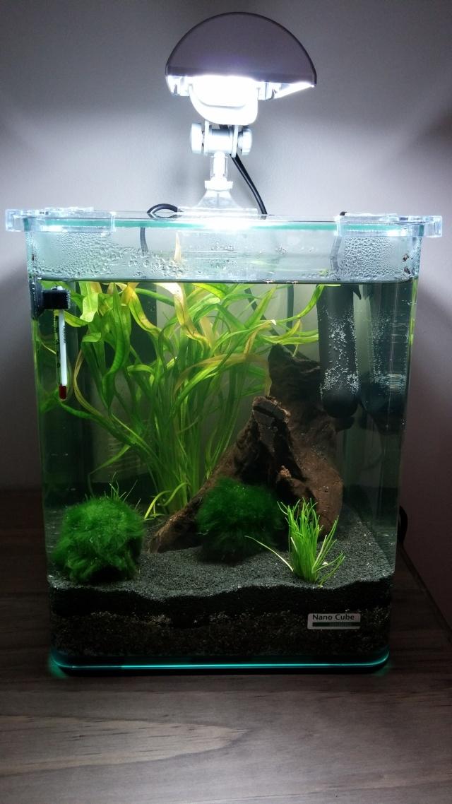 eau verdatre après 3 jours ??? Aqua112