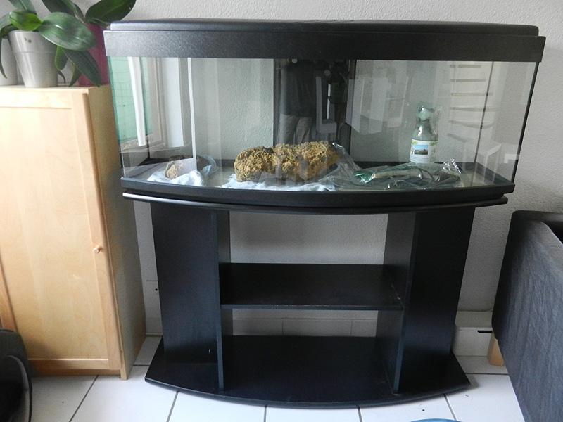 Mon aquarium de A à Z... C'est fini :( Dscn3010