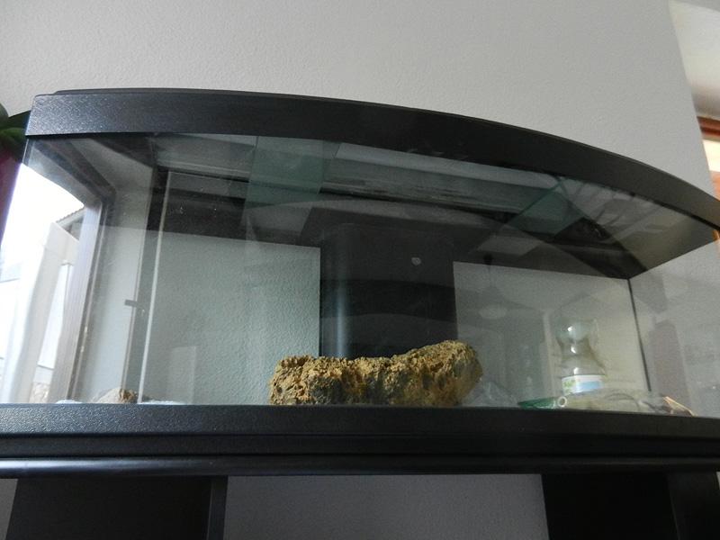 Mon aquarium de A à Z... C'est fini :( Dscn3011