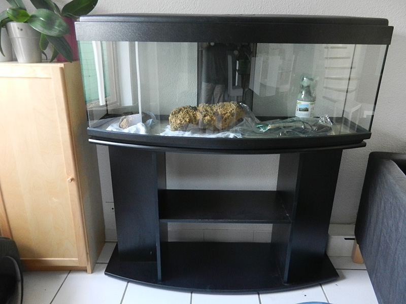 Mon aquarium de A à Z... C'est fini :( Dscn3017