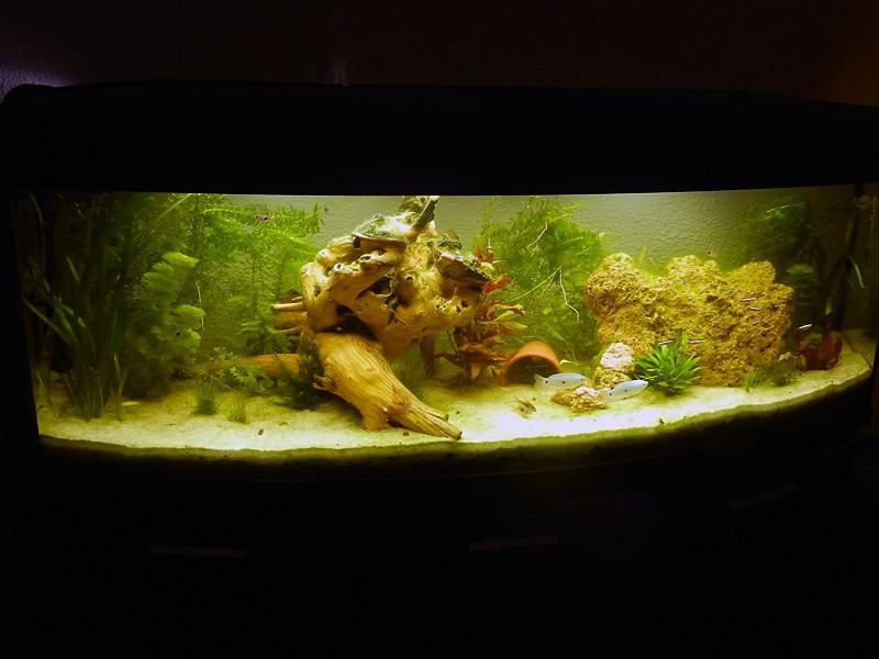 Mon aquarium de A à Z... C'est fini :( - Page 6 Dscn3310