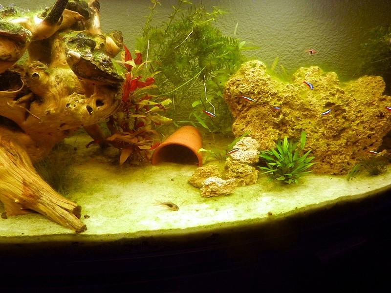 Mon aquarium de A à Z... C'est fini :( - Page 6 Dscn3311