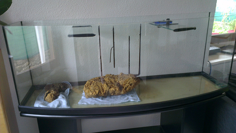 Mon aquarium de A à Z... C'est fini :( Imag1910