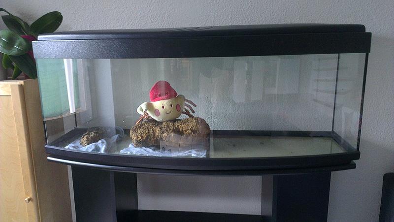 Mon aquarium de A à Z... C'est fini :( Imag1911