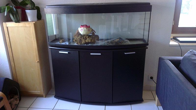Mon aquarium de A à Z... C'est fini :( Imag2015