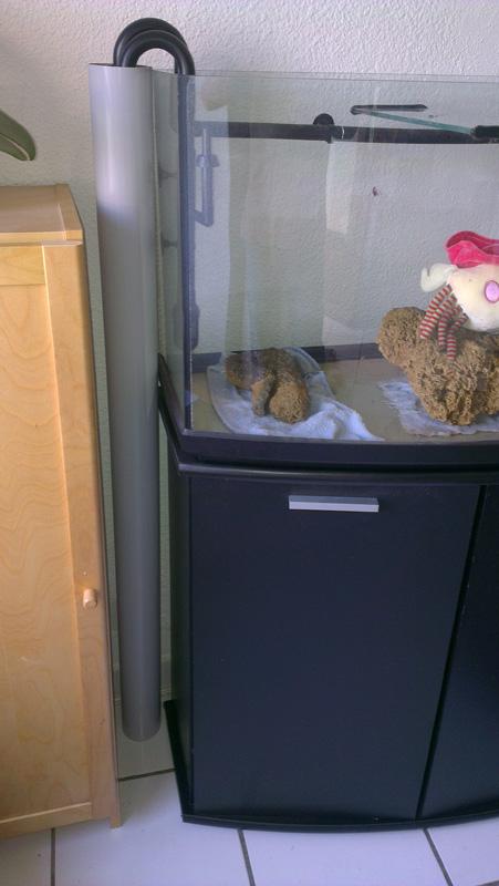 Mon aquarium de A à Z... C'est fini :( Imag2022
