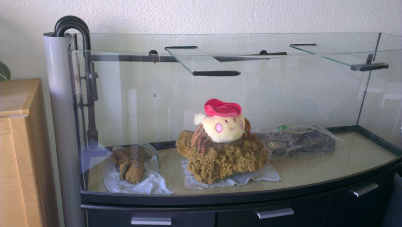 Mon aquarium de A à Z... C'est fini :( Imag2023