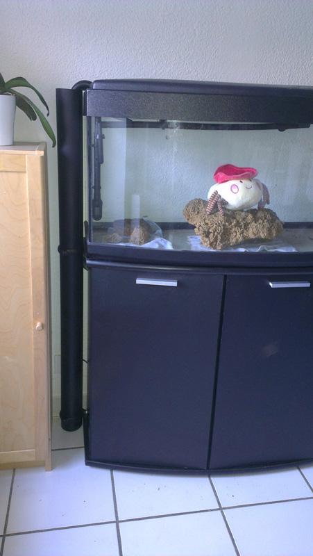 Mon aquarium de A à Z... C'est fini :( Imag2028