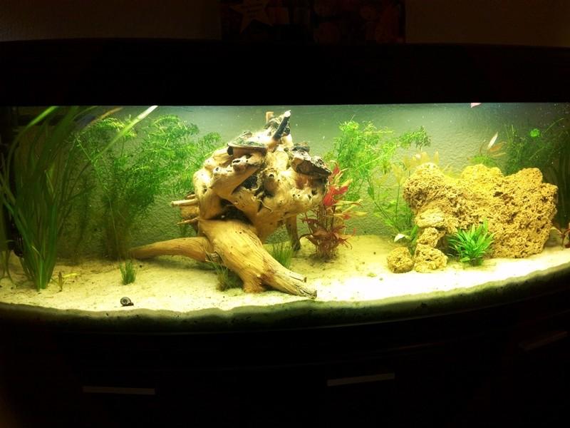 Mon aquarium de A à Z... C'est fini :( - Page 6 Img_2010