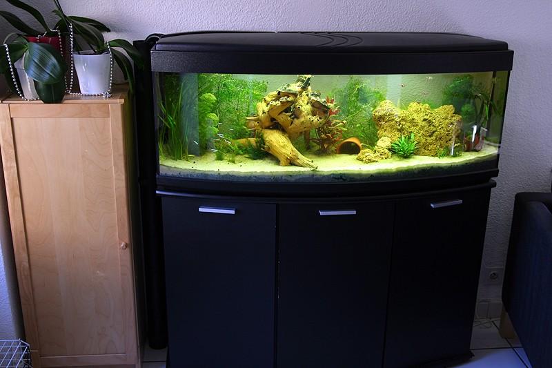 Mon aquarium de A à Z... C'est fini :( - Page 6 Img_8510