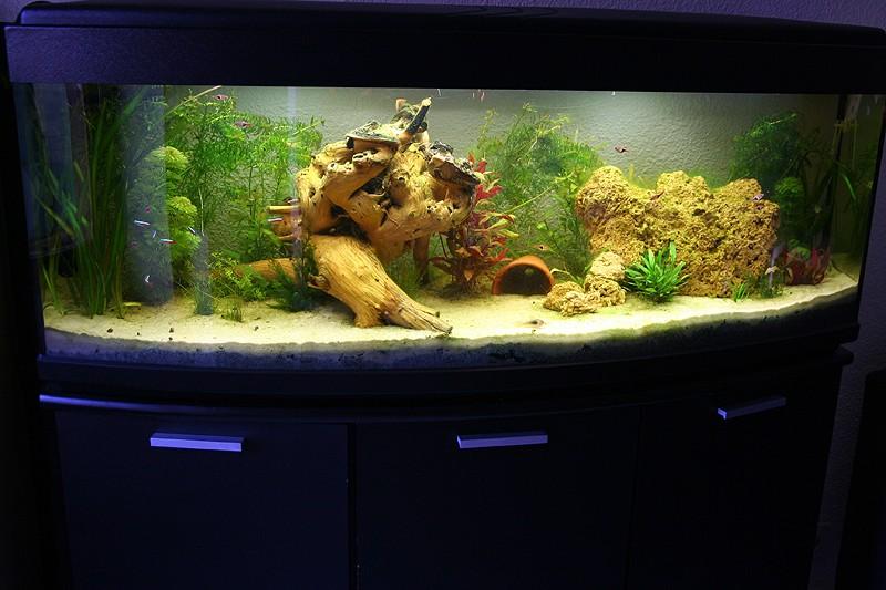 Mon aquarium de A à Z... C'est fini :( - Page 6 Img_8511