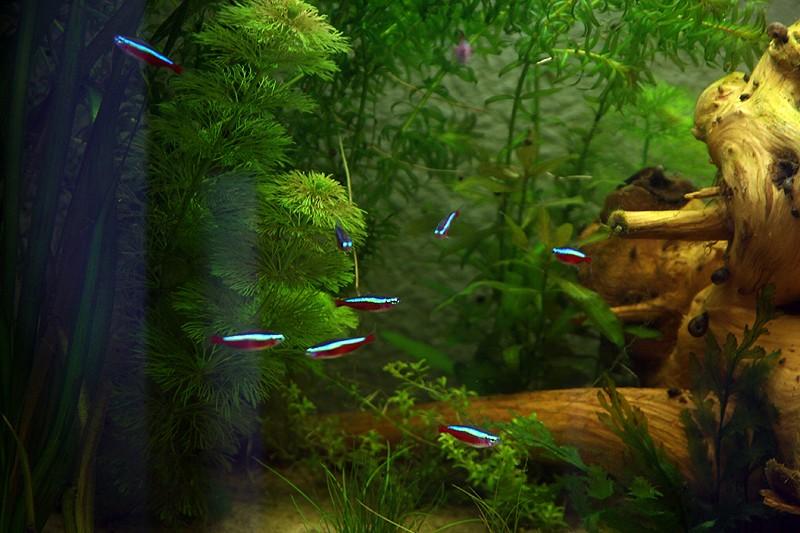 Mon aquarium de A à Z... C'est fini :( - Page 6 Img_8515
