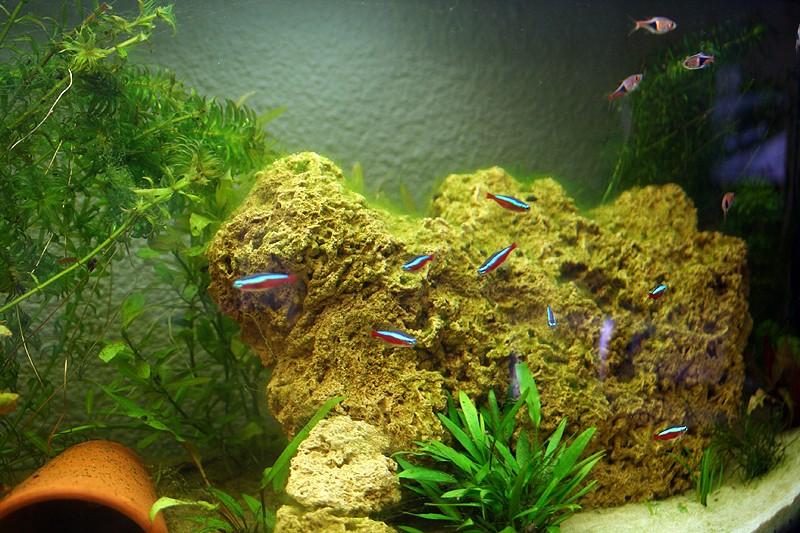 Mon aquarium de A à Z... C'est fini :( - Page 6 Img_8517