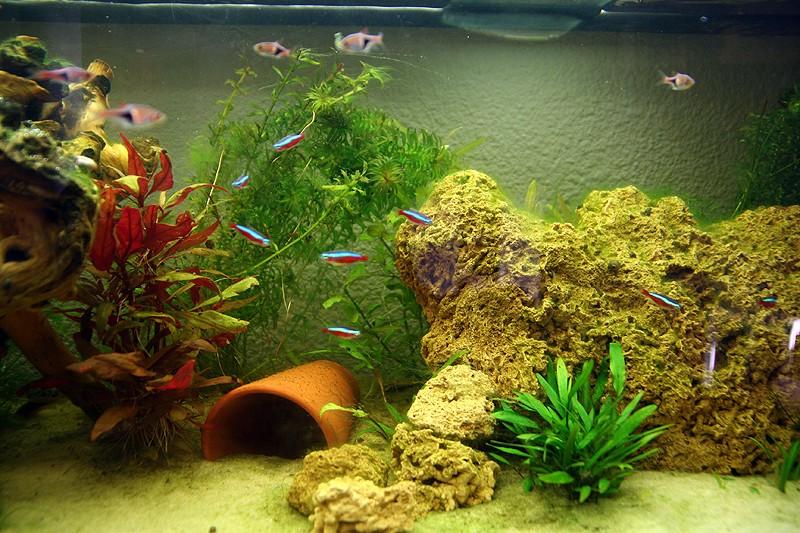 Mon aquarium de A à Z... C'est fini :( - Page 6 Img_8518