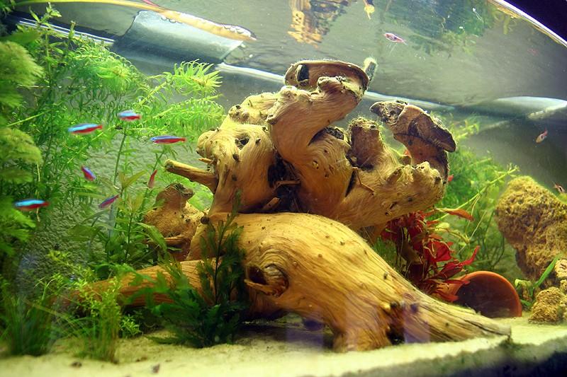 Mon aquarium de A à Z... C'est fini :( - Page 6 Img_8519