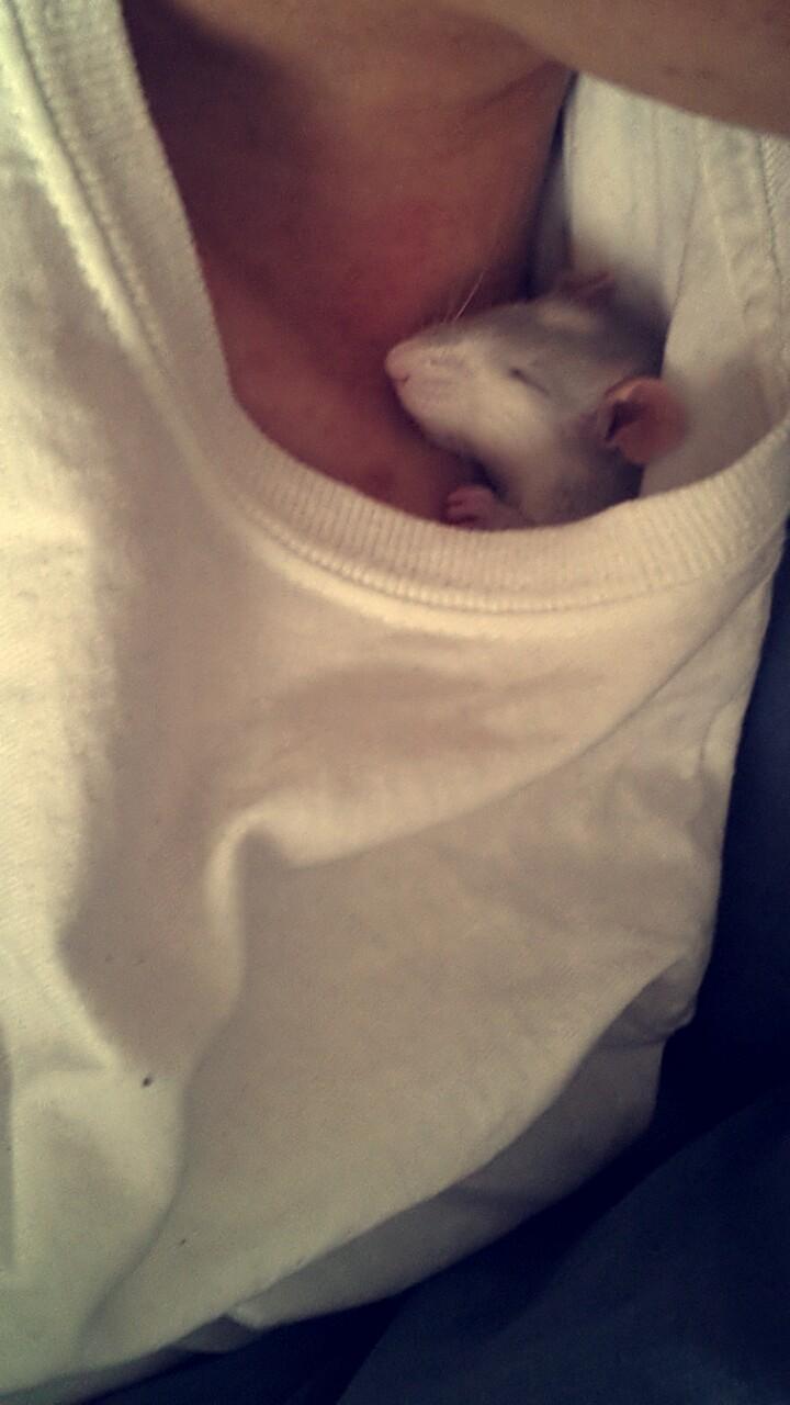 Mes RatCorne♥ Snapch12