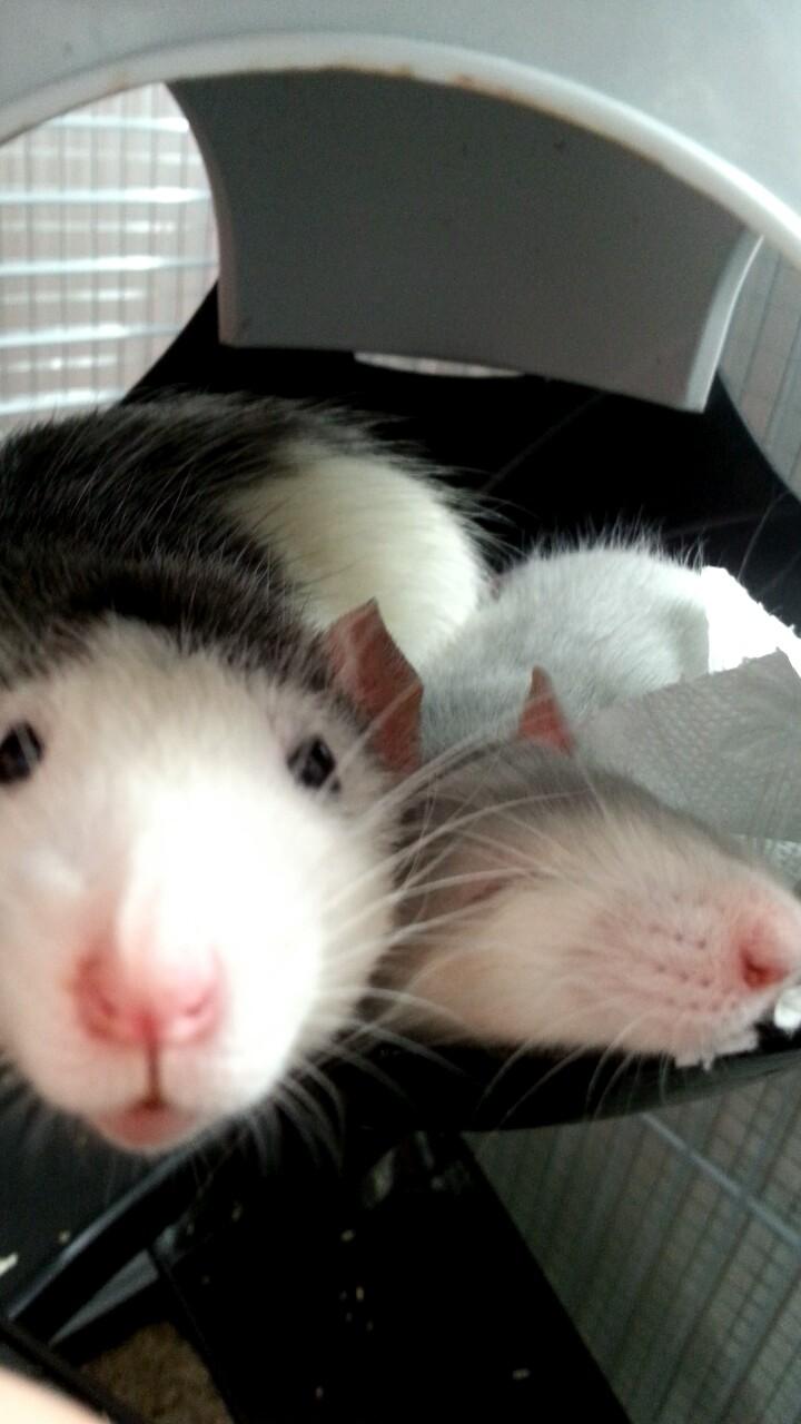 Mes RatCorne♥ Snapch13