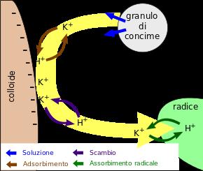 scolapasta Scambi10