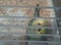 2 petites nouvelle Cloche10