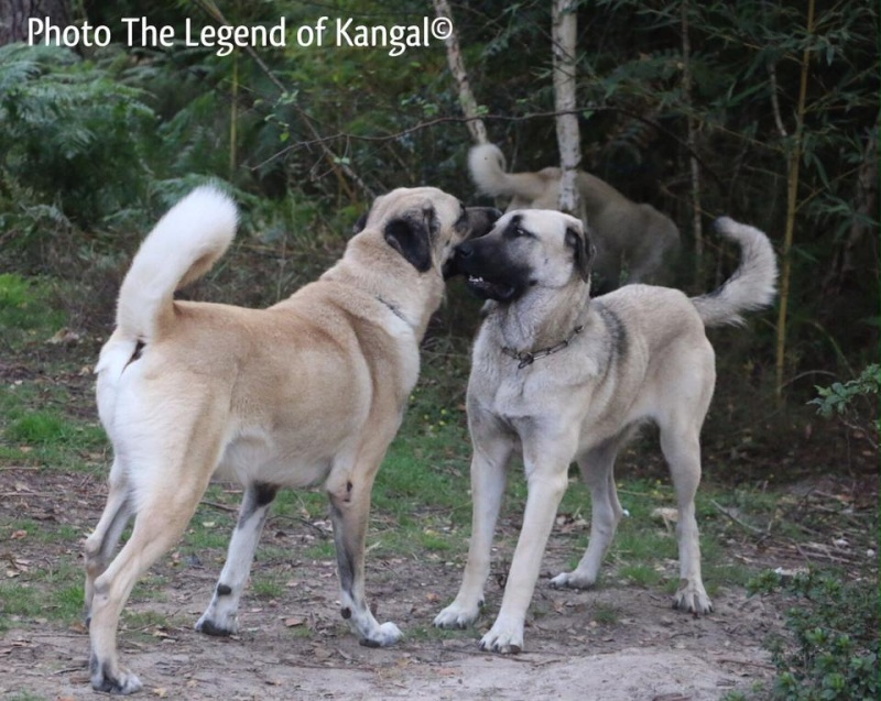 KANGALS 15603510