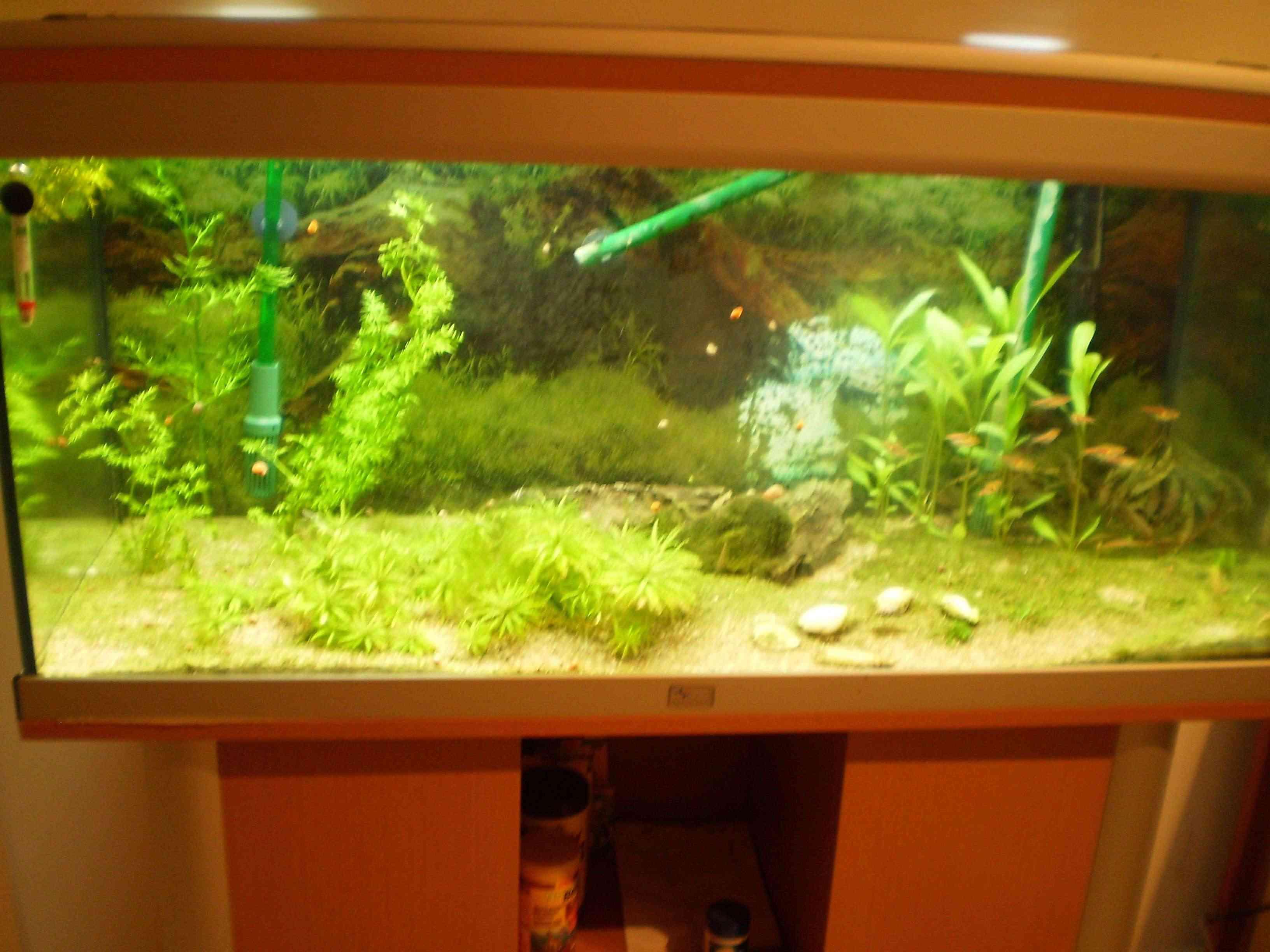 Présentation aquarium 200L bruts Aquari11
