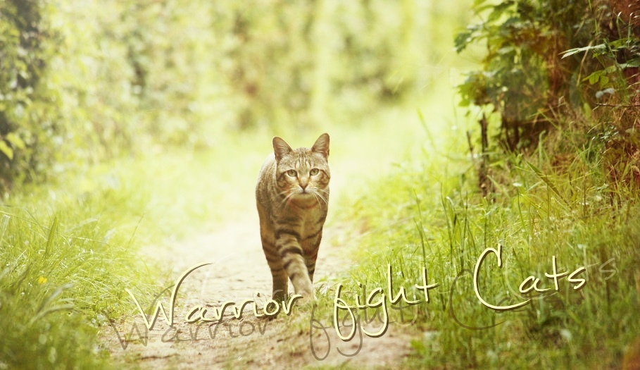 Warrior Fight Cats
