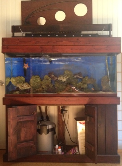 Selling Everything Fish10