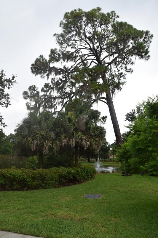 Trip en Floride du 06 juillet au 25 juillet - Page 2 20140108