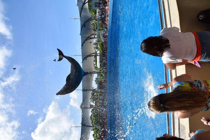 Trip en Floride du 06 juillet au 25 juillet - Page 2 20140751