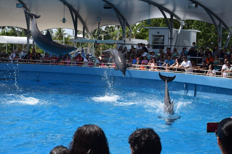 Trip en Floride du 06 juillet au 25 juillet - Page 2 20140754