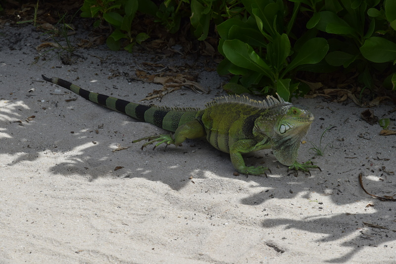 Trip en Floride du 06 juillet au 25 juillet - Page 2 20140763