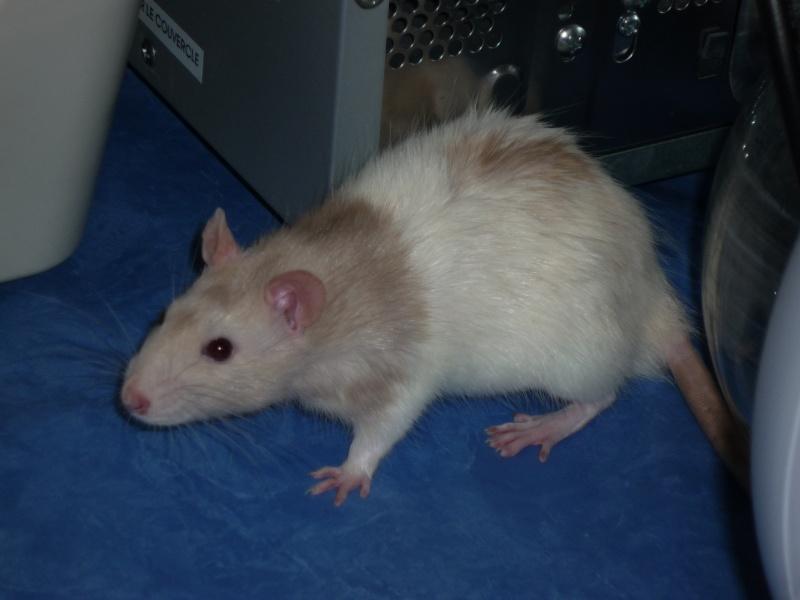 Mes fifilles et mes anciens Rats_510